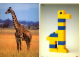 Book No: 9055b2  Name: Set 9055 Activity Card 2 - Giraffe (120246)