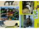 Book No: 9160b2  Name: Set 9160 Activity Card 2 - Hippopotamus and Alligator (120330)