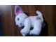 Gear No: dogfrnd1  Name: Friends Dog White Plush