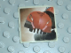 Gear No: kratstk7  Name: Sticker, Bionicle Kraata Sticker  7 (Turahk)