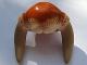 Part No: 87573pb01  Name: Minifigure, Headgear Head Top, Dark Tan SW Iktotchi Horns, Dark Orange Saesee Tiin Pattern