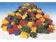 Set No: 9065  Name: Lego Duplo Basic Medium Set (Basic Medium Bulk) - 114 Piece Version