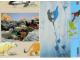 Book No: 9160b4  Name: Set 9160 Activity Card 4 - Polar Bear (120330)