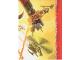 Gear No: njo4de231  Name: Ninjago Trading Card Game (German) Series 4 - #231 +30 auf alle Werte Card