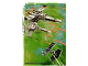 Gear No: sw2en192  Name: Star Wars Trading Card Game (English) Series 2 - #192 Puzzle Card