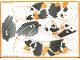 Part No: 59437  Name: Koi Skin Sheet 1 of 2 for Set 81000-1